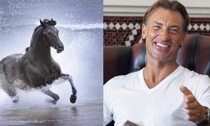 Hervé Renard fan du cheval barbe marocain