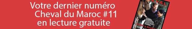 Cheval du maroc #11