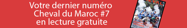 Cheval du maroc #7