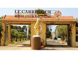 Royal Club Équestre le Carrefour : au croisement du cheval d'hier et de demain